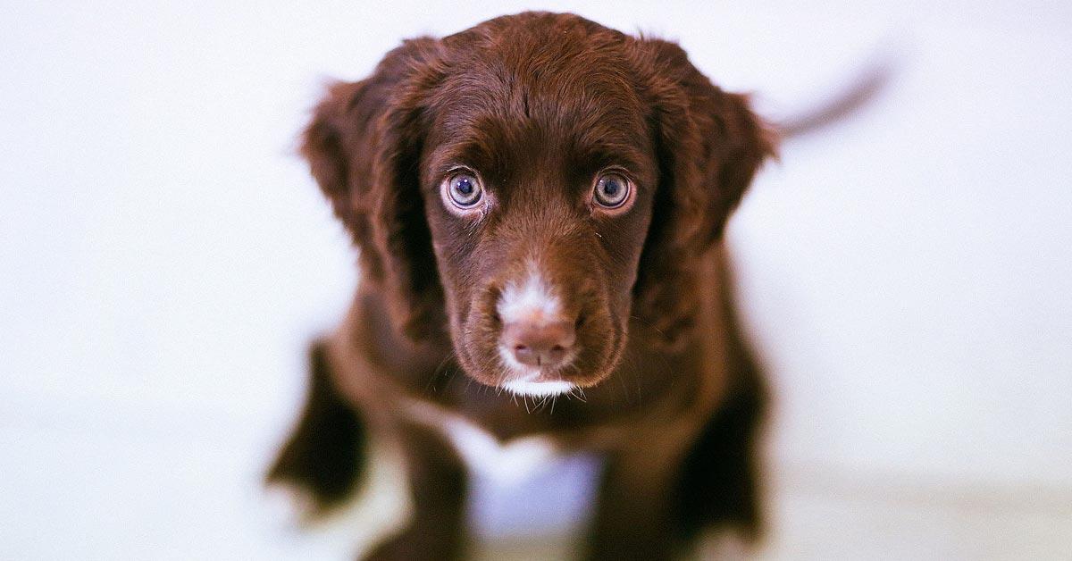 5 tapaa jotka ärsyttävät koiraasi suunnattomasti