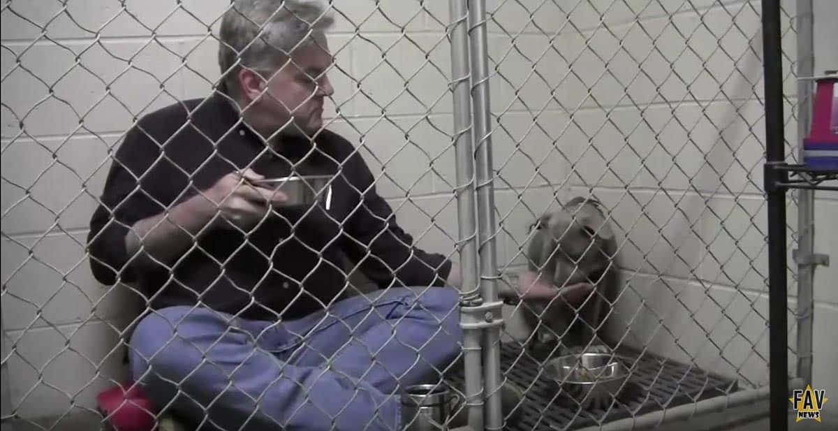 Eläinlääkäri syö kaltoinkohdellun koiran kanssa.