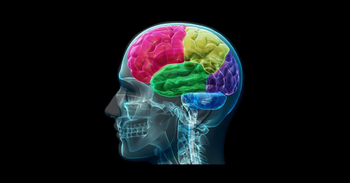 Kohokohtavisa: Tämä väritesti kertoo kumpi aivopuoliskosi dominoi
