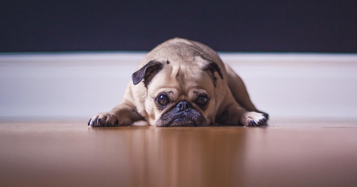 Näistä ärsyttävistä tavoista koirasi ei pidä