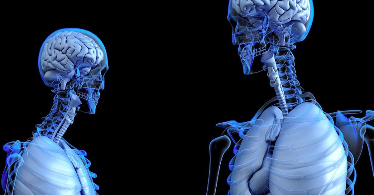Aivomme kutistuvat – tutkijat kertovat miksi