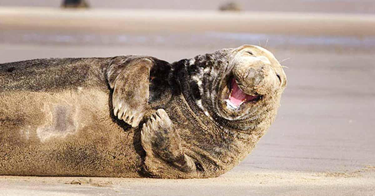 10 ihanaa kuvaa hymyilevistä eläimistä – katso kuvat ja huomaat kuinka hyvä mieli tarttuu