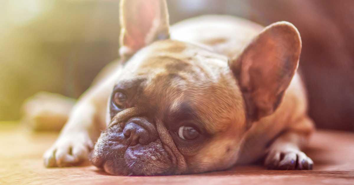 12 merkkiä siitä, että teillä koira päättää kaapin paikan.