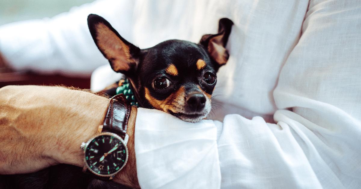 5 syytä, miksi lemmikit ovat hyväksi terveydelle