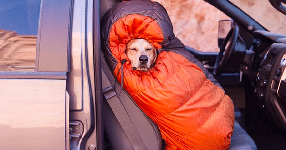 12 kuvaa, jotka innostavat telttailemaan koiran kanssa