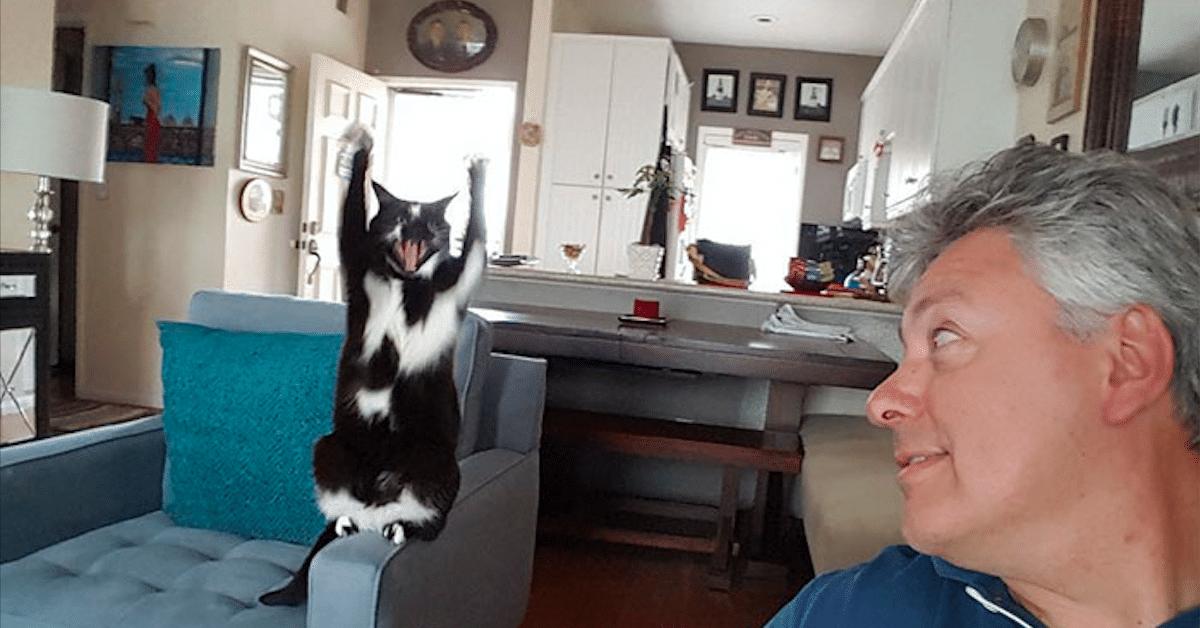 Kissan erikoinen tapa: viihtyy tassut pystyssä