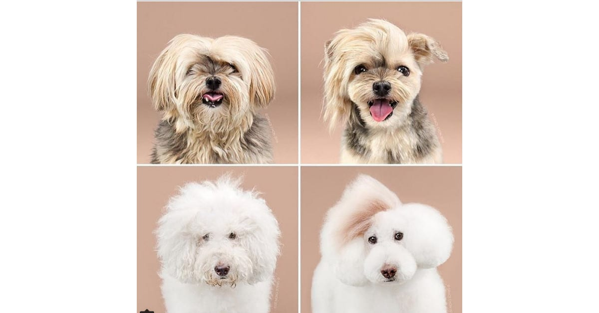 10 supersöpöä koiraa ennen ja jälkeen parturoinnin