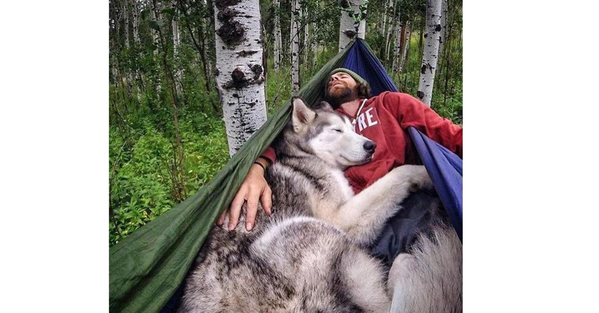 12 kuvaa jotka saavat sinut ottamaan koirasi mukaan telttaretkelle