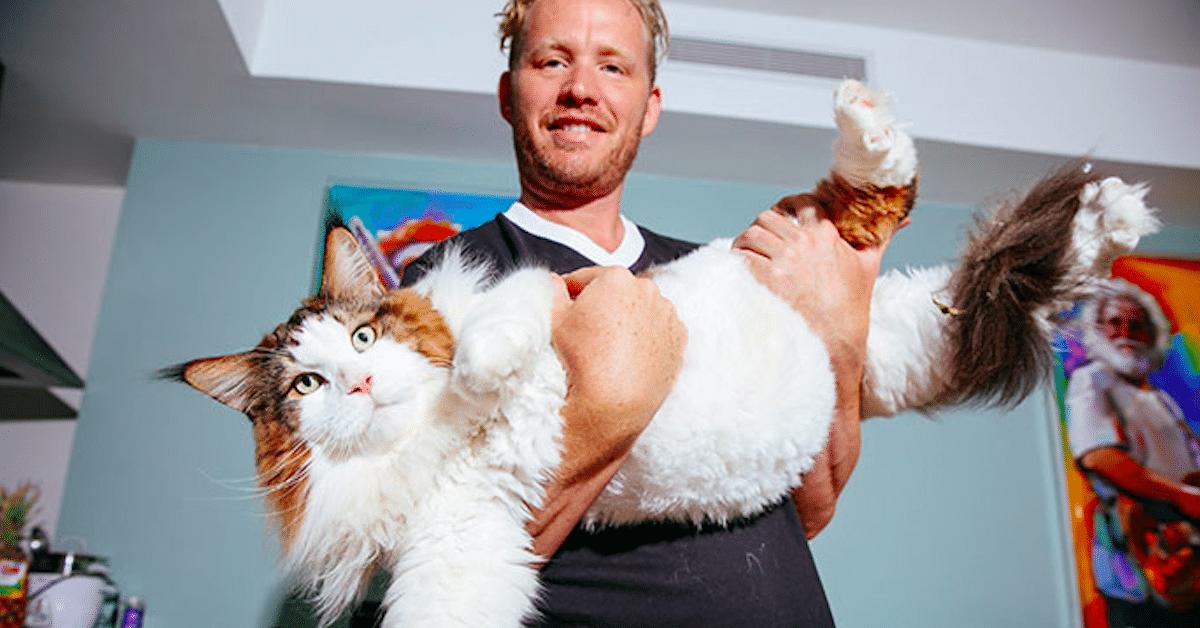 New Yorkin isoin kissa Samson on pörröinen jättiläinen