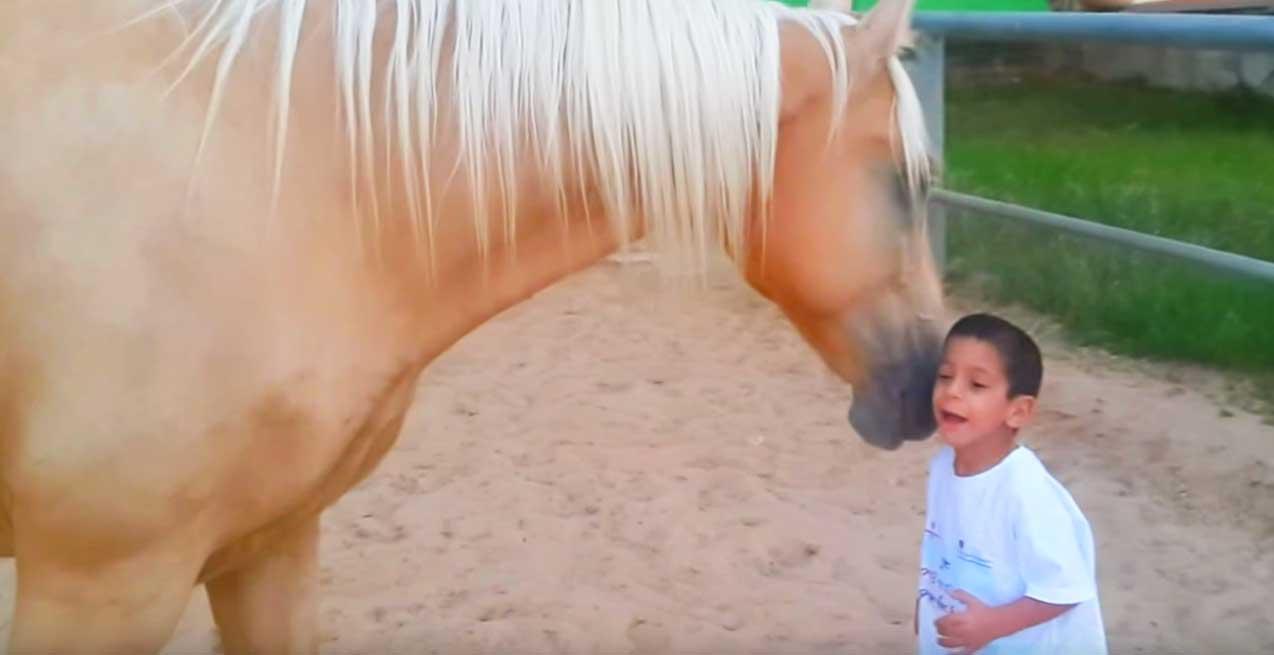 Williamsin oireyhtymää sairastava pieni poika kohtaa hevosen – Tämä video sulattaa sydämen