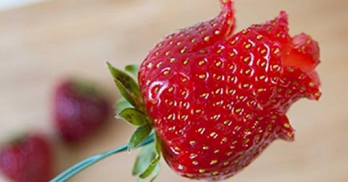 Näin valmistat mansikkaruusuja – kruunaa mansikkakakkusi