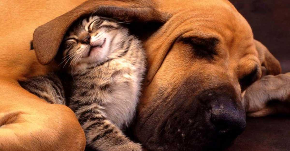 Läheisyydenkipeitä kissoja, jotka ovat rakastuneet koiriin – Katso suloiset kuvat