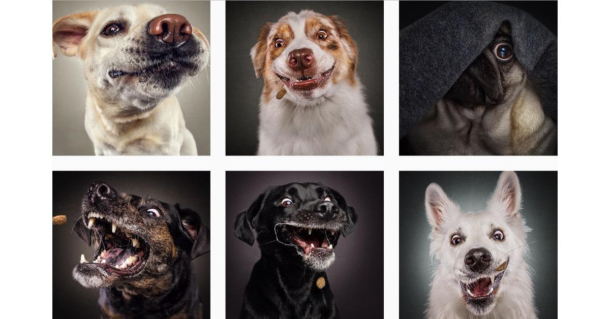 10 hulvatonta kuvaa koirista nappaamassa naksuja ilmasta