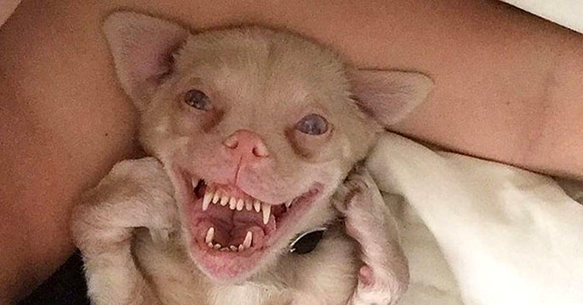 Tucker sulattaa sydämiä ja hymyilee kuin lepakko