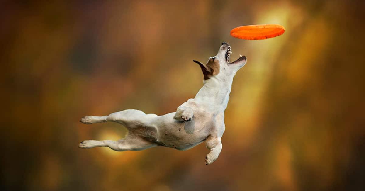 12 koiraa jotka ottavat syksyn vastaan ilosta hyppien