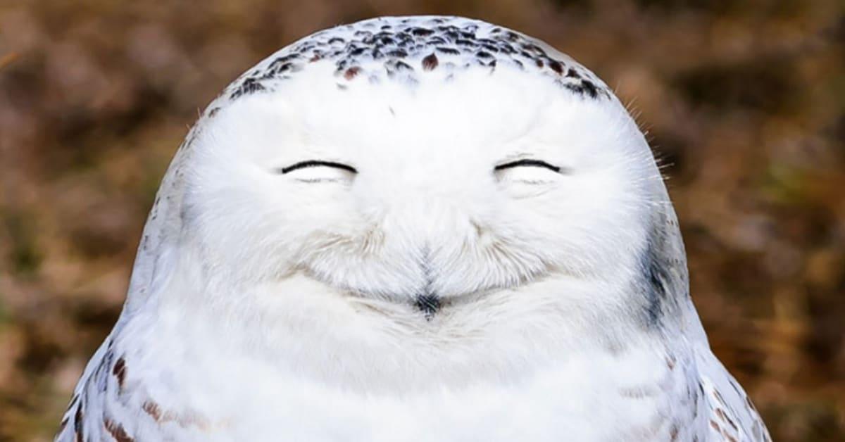 Huumoriluontokuvat näyttävät luonnon hauskemman puolen