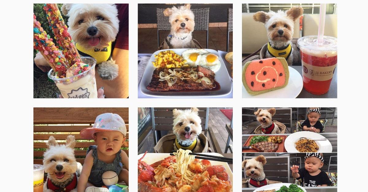 Popeye oli nälkää näkevä löytökoira – nyt hän syö paremmin kuin moni meistä