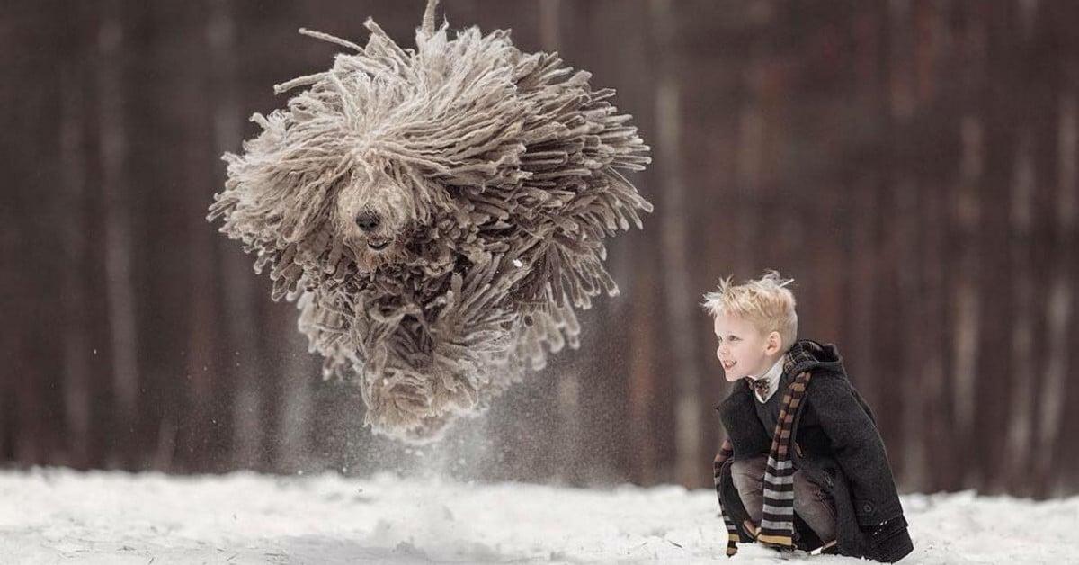 """""""Lentävä moppi ja pojankloppi"""" – Nämä kuvat pojasta ja koirasta piristävät päivääsi"""