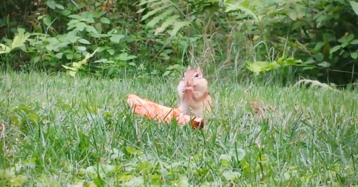 Tällä oravalla on selkeästi pizzaperjantai