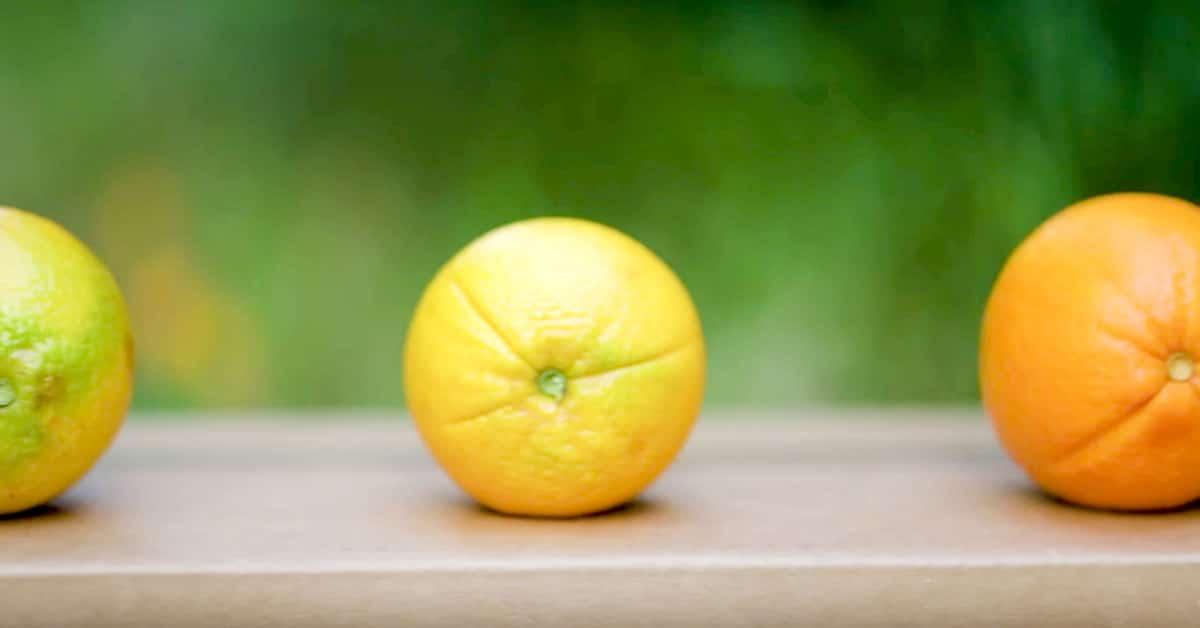 Näin valitset parhaat appelsiinit kaupasta!