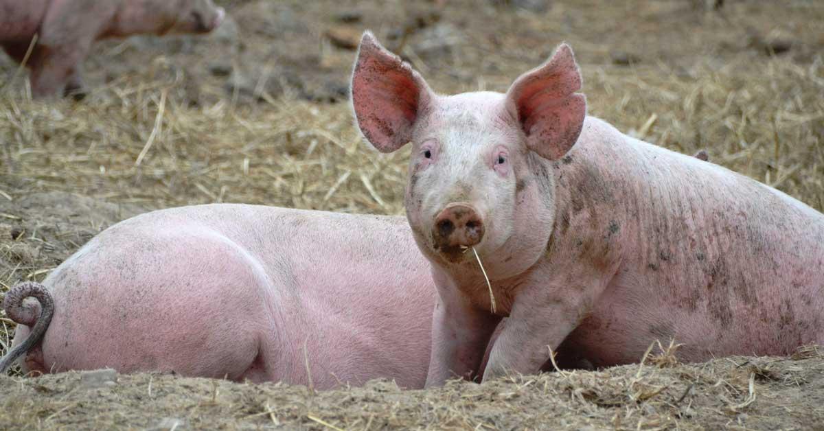 Laadukasta ruokaa eläinten hyvinvointi edellä – tässä on ideaa!