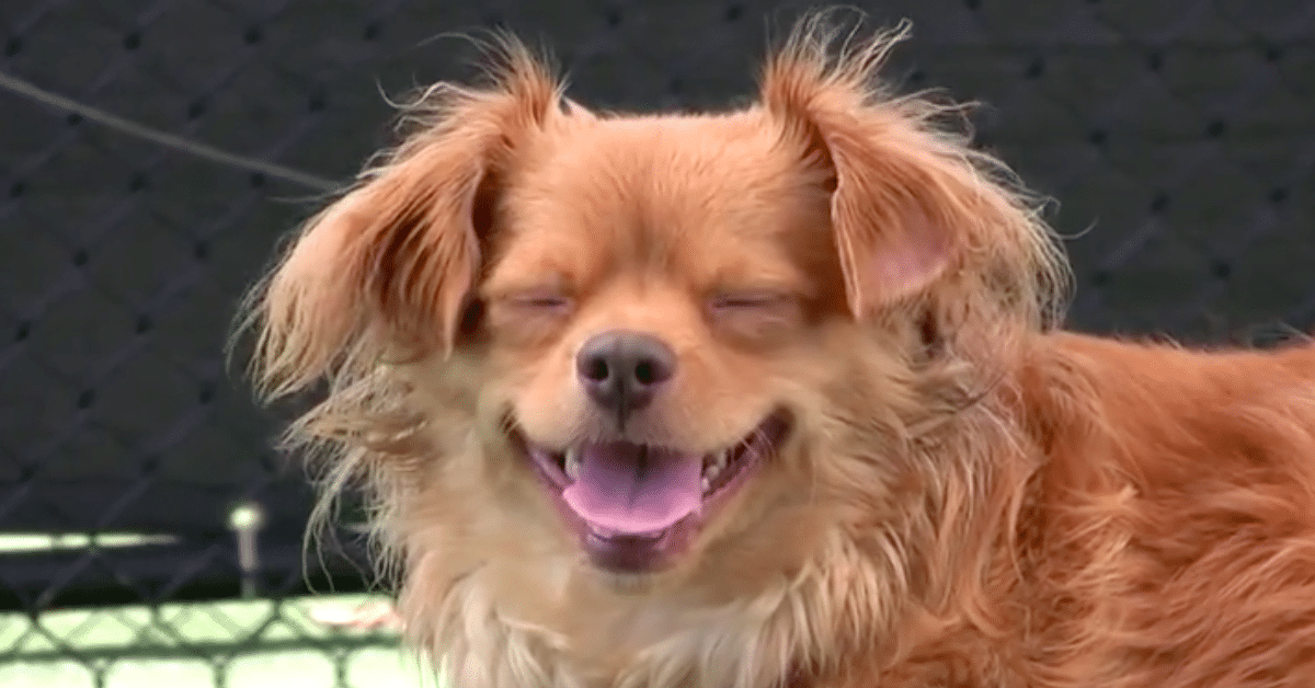 Hauskimmat naurut – iloa sunnuntaihin!