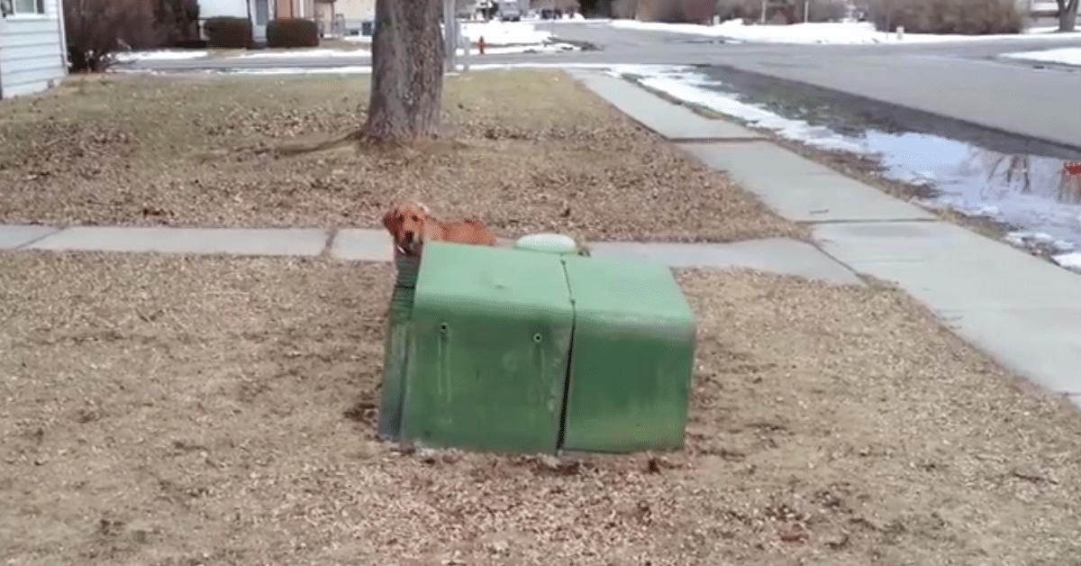 Koira leikkii piilosta omistajansa kanssa