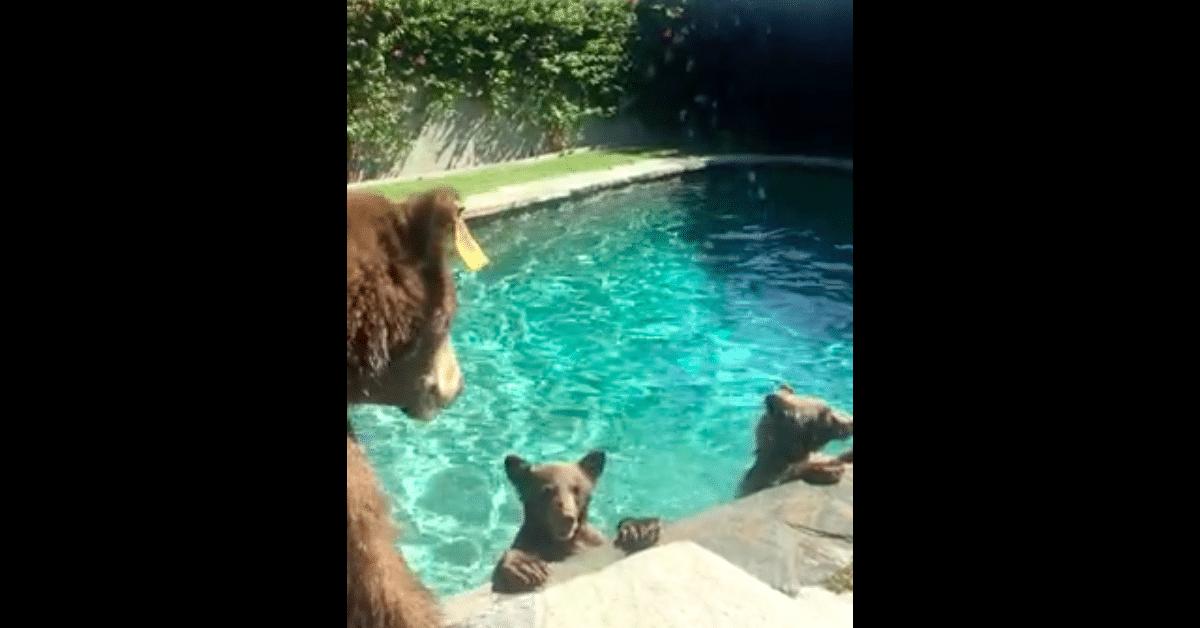 Karhuemon ja pentujen uimaretki