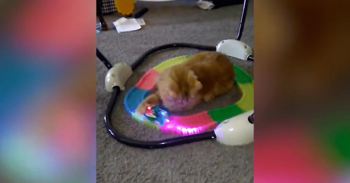 Lelujuna ei ole tämän kissan mieleen