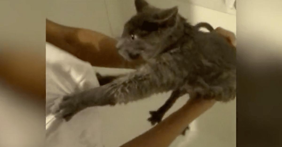 Kylpemistä inhoava kissa hyppää ulos ammeesta