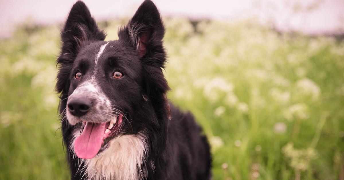 17 tapaa, joilla koira muuttaa elämäsi