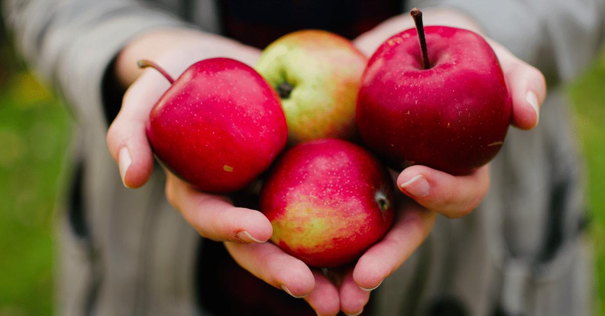 Kaikki oleellinen omenasta