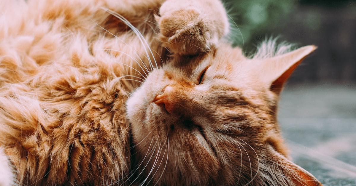 Tutkijat kertovat: Tästä syystä kissat kaatavat kaiken kumoon