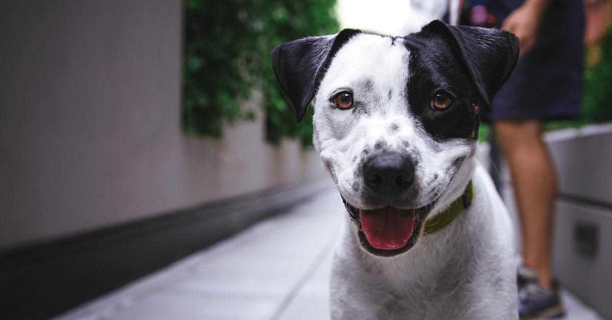 Tutkimus paljastaa: Koirat muistavat kaiken mitä teemme