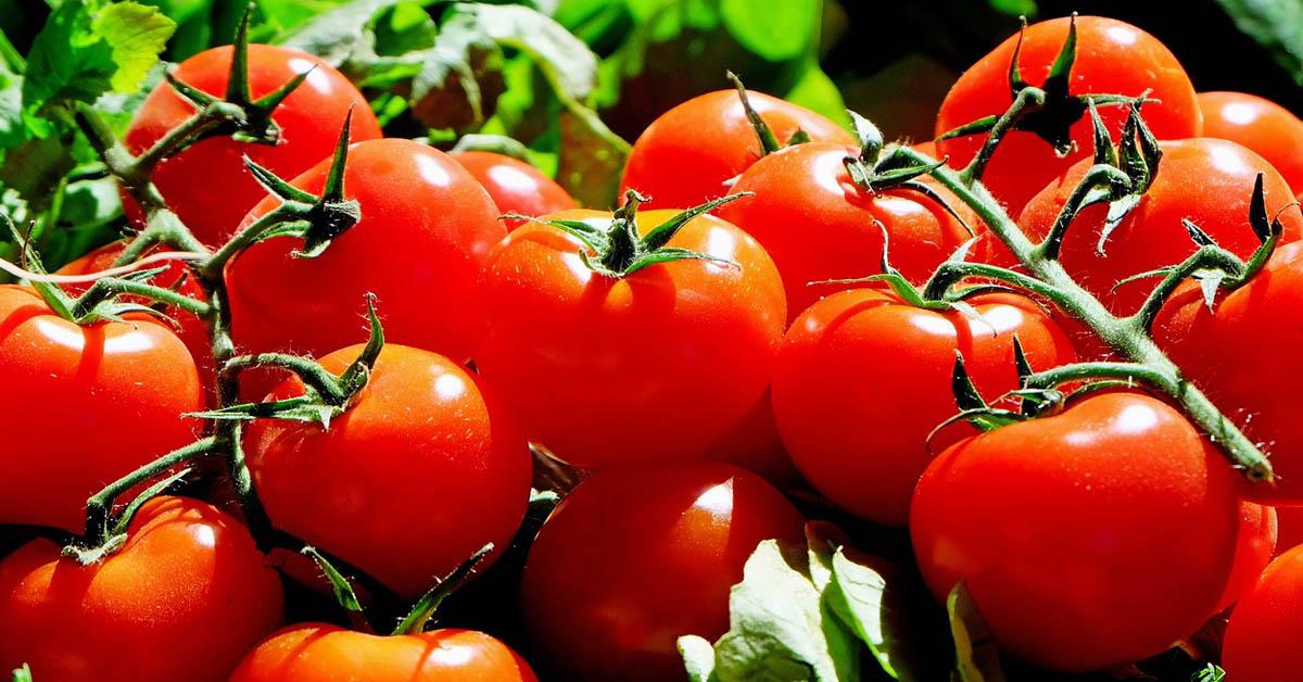 7 Tomaattien positiivista terveysvaikutusta