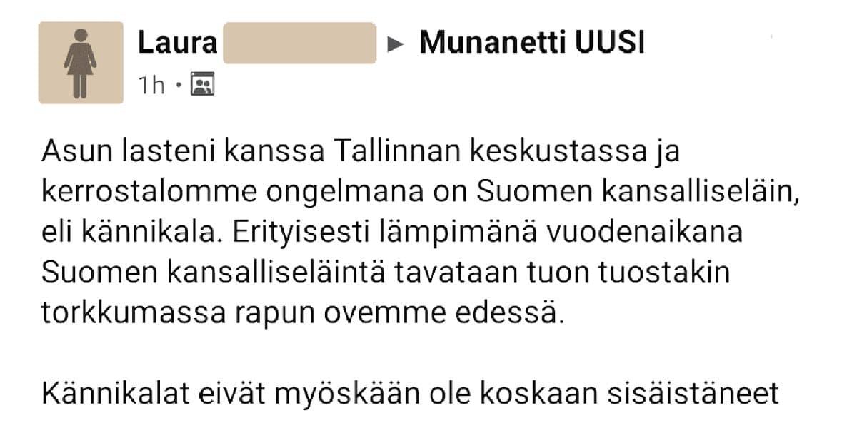 FEISSARIMOKAT: Suomalaiset Tallinnassa – kännikalat valtaavat vanhan kaupungin